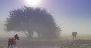 2.7° ai Pratoni del Vivaro stamattina, dove l'inverno non va mai via!