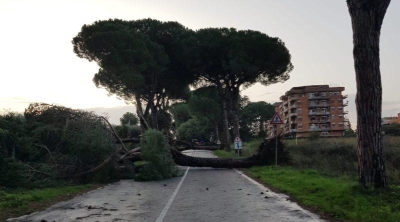 vento forte alberi caduti Cisterna