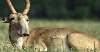 Lo strano mondo animale e le sue specie più particolari.