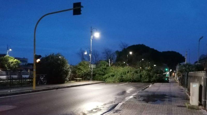 vento forte alberi caduti strada Terracina