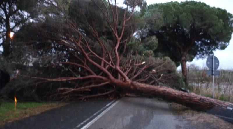 vento forte alberi caduti Terracina
