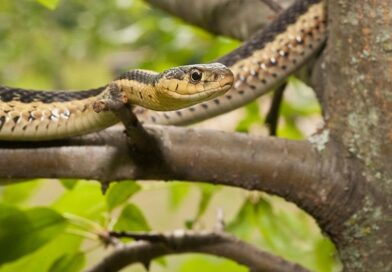 L'amicizia tra serpenti